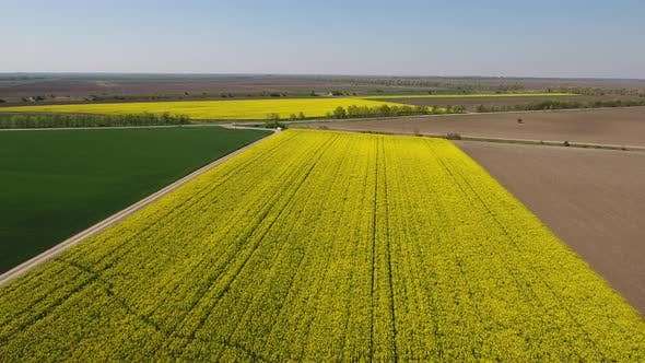 Oilseed Rape And Wheat Fields