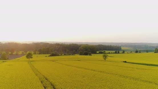 Thumbnail for Agricultural Landscape Against Sky
