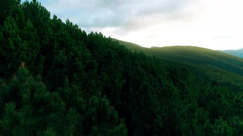 Flying Over The Cloudy Evening Forest