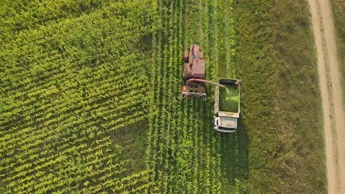 Top View of Forage Harvester and Dump Truck