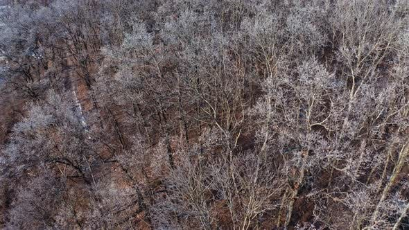 Thumbnail for Aerial view of trees background. Forest landscape aerial view background