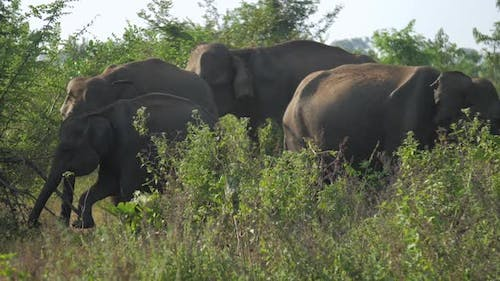 Small Elephant Comes To Old Animals and Yawns at Green Grass