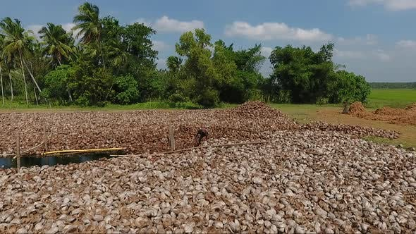 Thumbnail for Plantation Worker Sorting Coconut Husks