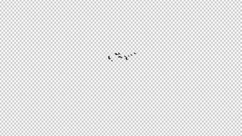 13 Black Birds - Flying Transition IV