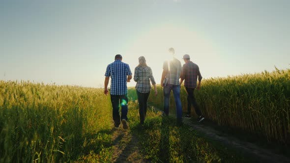 Thumbnail for A Group of Farmers Walking Along the Wheat Fields, Talking