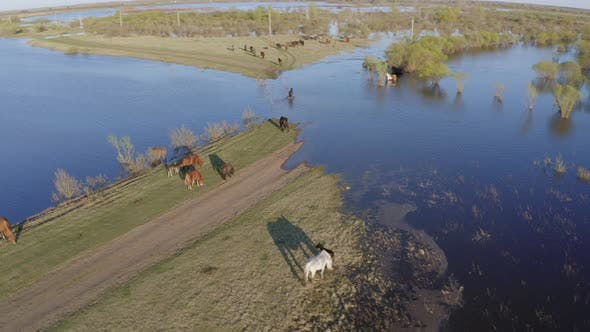 Thumbnail for The Horse Herd Graze Along the Shore of the Lake. Wild Horses in Nature