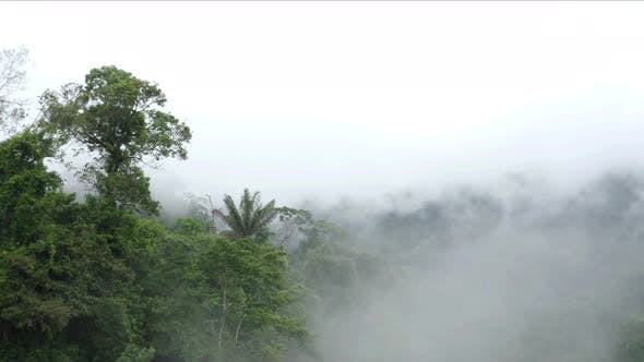 Aerial view, flying just above the canopy of a tropical forest