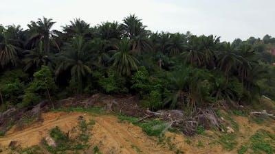 Dead oil palm tree in muddy soil