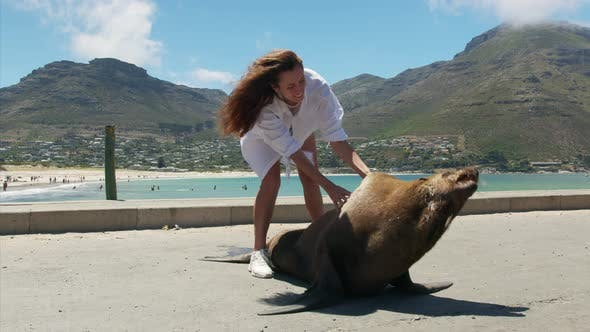 Thumbnail for Woman in Contsct with a Fur Seal Inthe Wild Cape Town South Africa