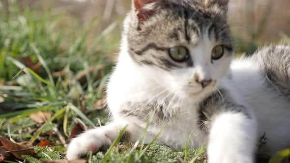 Felis catus animal playing in the grass slow motion 1920X1080 HD footage - Relaxing scene with kitte