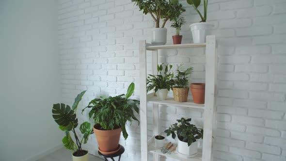 Botanik Zusammensetzung von Home Interior Garden
