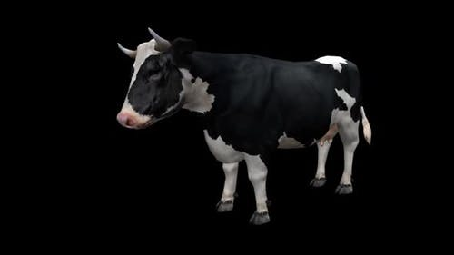 Cow Looped