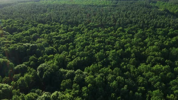 Thumbnail for Aerial View Tops Of Forest Trees