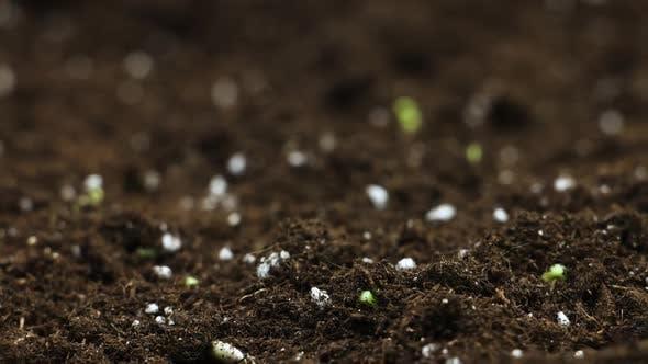 Thumbnail for Plant Timelapse