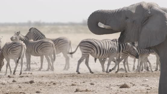 Elephant Quenching Thirst