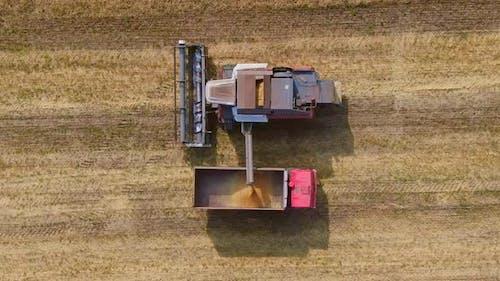 Closeup a Combine Harvester Pours Grain From a Vent Into a Dump Truck
