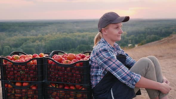 Thumbnail for A Young Farmer Sits Near the Tomatoes Collected in Boxes, Resting in a Picturesque Place