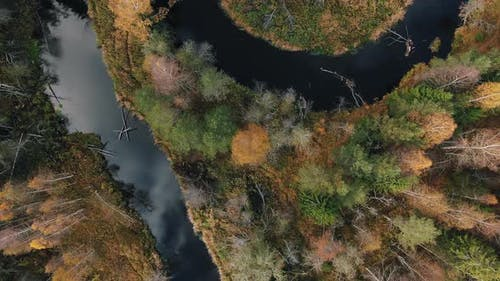 Forest with Yellow and Fir Trees and Calm River Aerial View