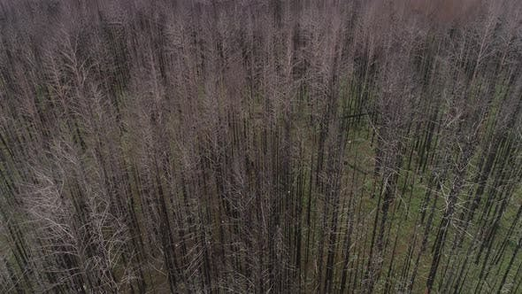 Thumbnail for Dead Forest, Withered Trees, Flyind Abobe the Forest