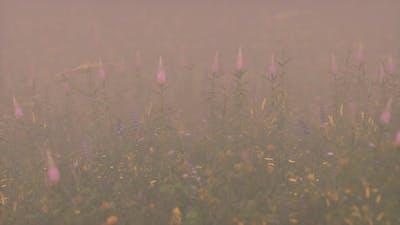 Wild Field Flowers in Deep Fog