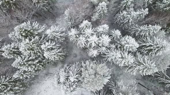 Thumbnail for AERIAL Flying Over the Snowy Forest and Hills