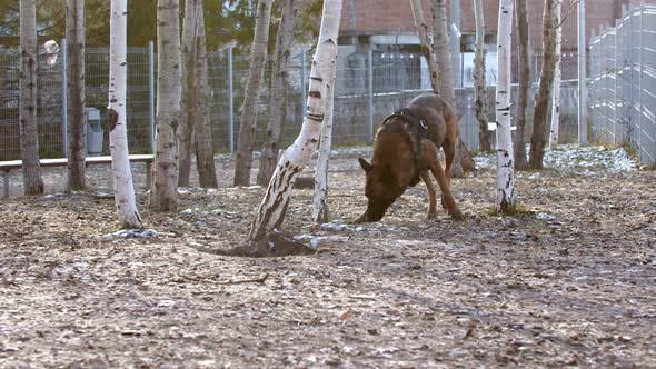 Thumbnail for An Army Dog Sniffing and Searching for Something