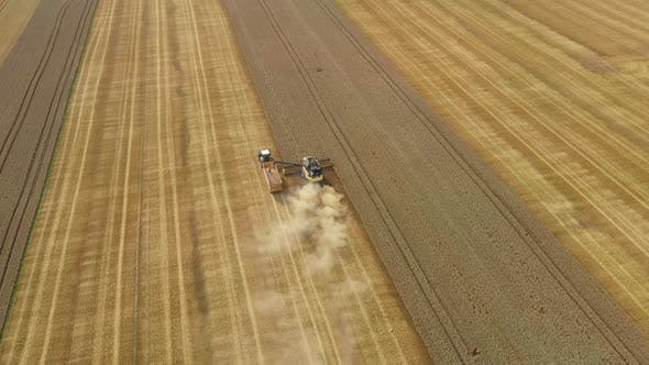 Cover Image for Harvester Harvests Wheat Crop On Field