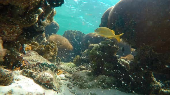 Cover Image for Seabed on the Coral Reef in the Caribbean Sea Full of Baby Fish