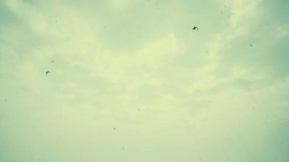 Thumbnail for Birds And Rain