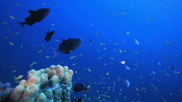 Cover Image for Underwater Fish Tropical Reef Marine