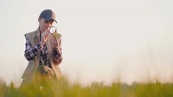 Thumbnail for A Farmer Studies the Shoots of Wheat on the Field