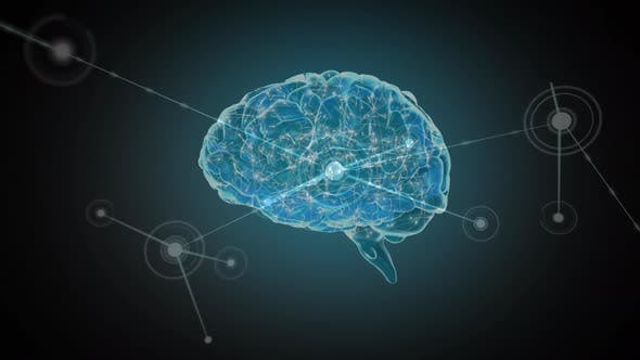 Digital brain with network