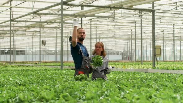 Thumbnail for Agronomy Engineers in a Greenhouse Using Modern Technology