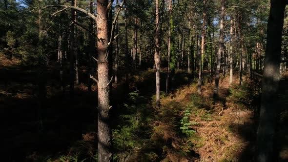 Thumbnail for Schönheitswald