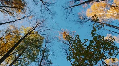 A Forest in an Autumn Season and Blue Clear Sky