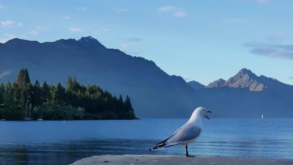 Un stand de mouette au bord du lac Wakatipu, Queenstown, South Island