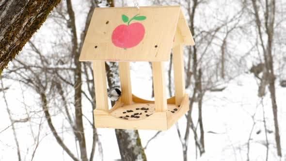 Thumbnail for Bird Feeder in the Park