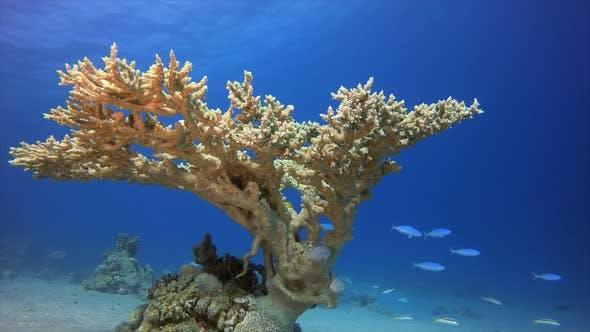 Thumbnail for Coral Reef Marine Life Hard Coral