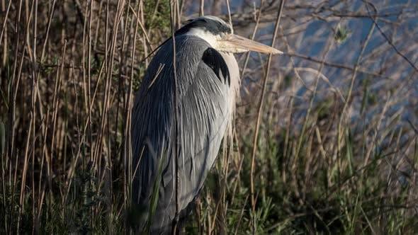 Vogeltier wild carmargue