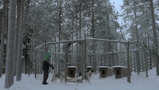Thumbnail for Child Looking at Husky Dogs in Outdoor Cage