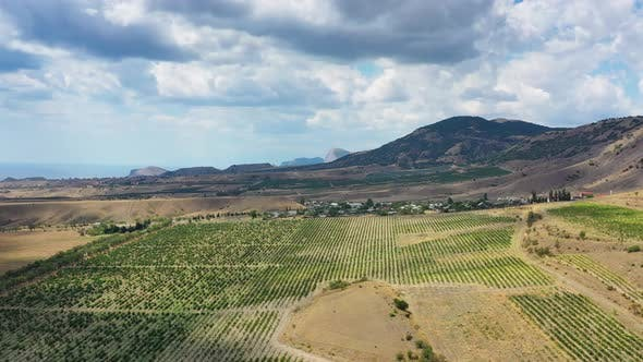 Thumbnail for Aerial View of Mountain Vineyard in Crimea