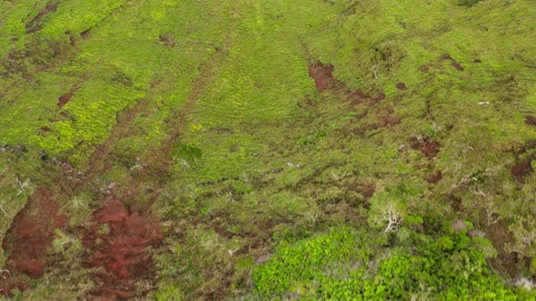 Thumbnail for Travel in Na Pali Coast State Park. Aerial View Over the Green Surface of Hawaiian Cliffs