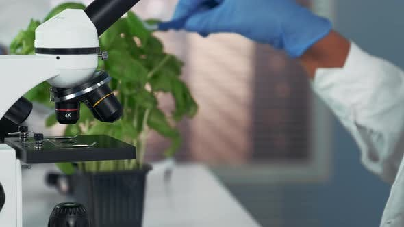 Thumbnail for Close-up of Female Scientist Using Surgical Pincers To Put Plant Leaf on Microscope Stage