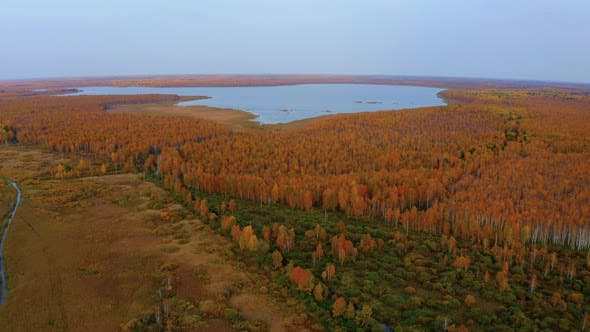 Thumbnail for Aerial Top View of Beautiful Lake Surrounded By Colorful Forest in Autumn