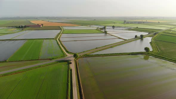 Thumbnail for Aerial: Flying Over Rice Paddies, Flooded Cultivated Fields Farmland