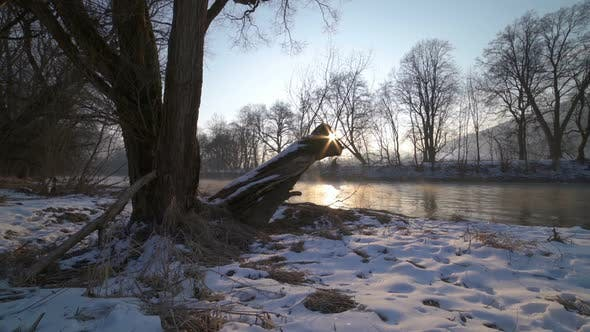 Thumbnail for Peaceful Sunny Morning with Sunrise over Trees on River Bank