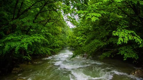 River Rapids in the Forest