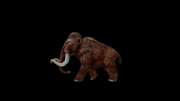 Mammoth Walk