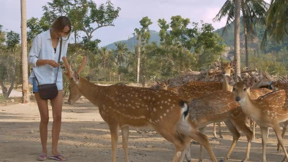 Thumbnail for Girl Feeds Deer in National Park Against Plants