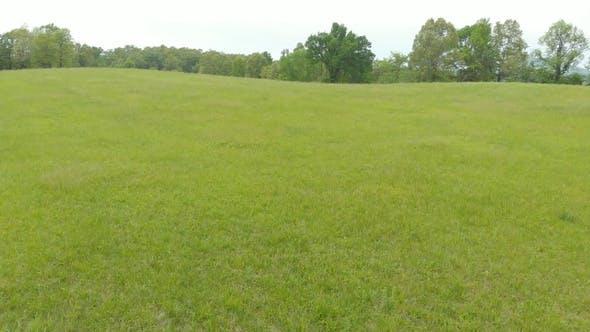 Grass Prairie Field
